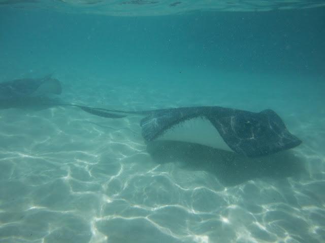Stingray City - Georgetown - Ilhas Cayman