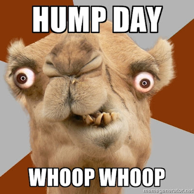 Hump Day HD wallpapers