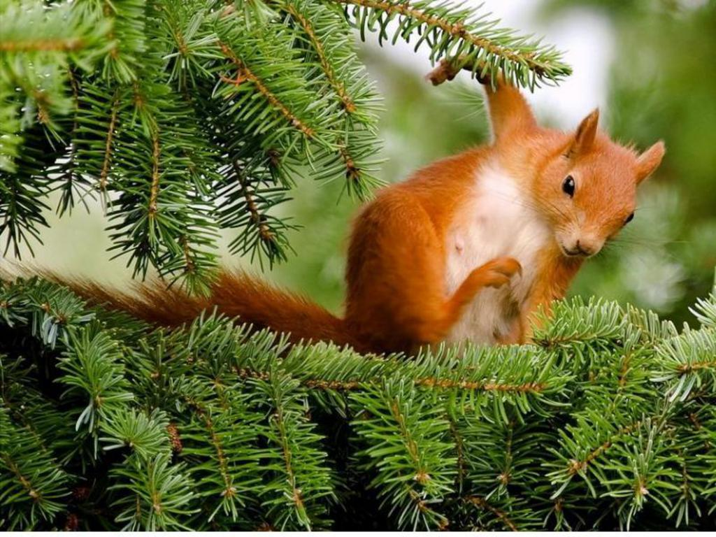 Squirrel Wallpapers Fun Animals Wiki Videos Pictures