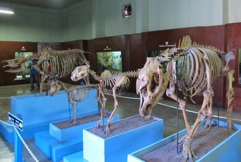 Tempat wisata museum zoology bogor