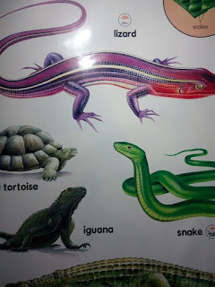 types of reptile