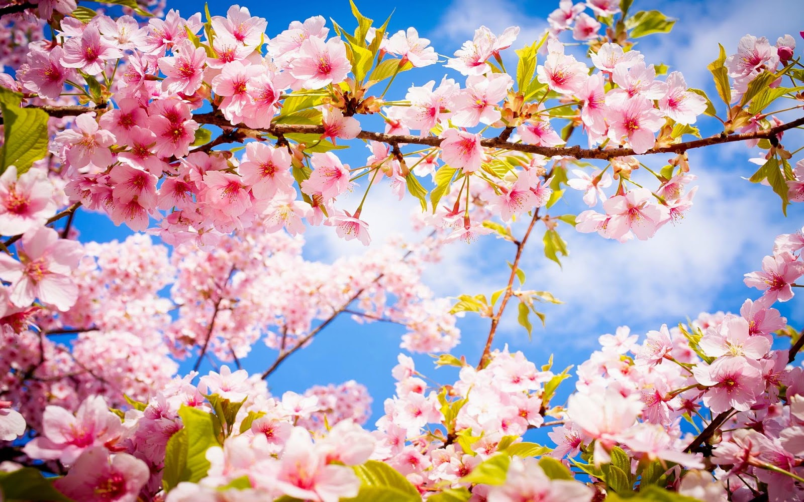 Bureaublad achtergrond in de lente met roze bloemen