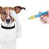 Η προληπτική εφαρμογή της κτηνιατρικής που συμπεριλαμβάνει εξετάσεις ρουτίνας