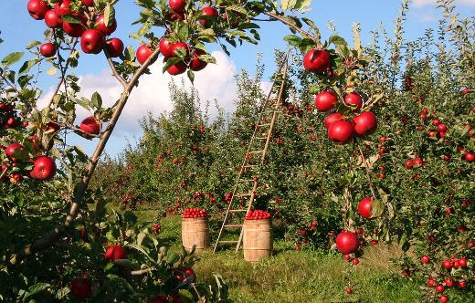 Agricultura concede más de 2 millones de euros para ayudas del Programa de Desarrollo Rural sobre proyectos de cooperación agraria