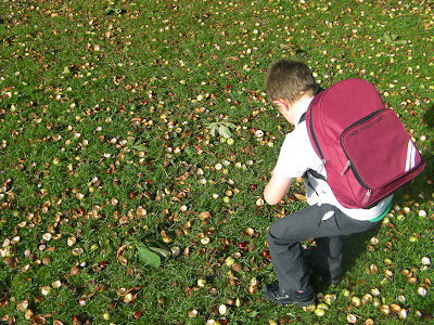grassland covered with conkers horse chestnuts
