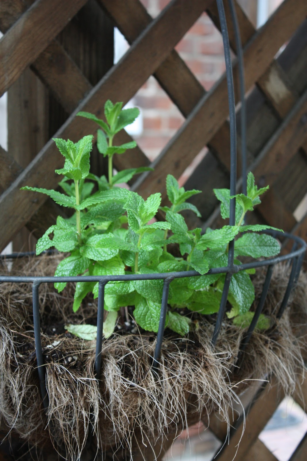 Uprooting and Transferring Herbs | 17 Apart