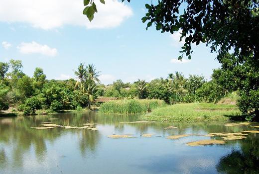 Bendungan Curah Cottok, Situbondo