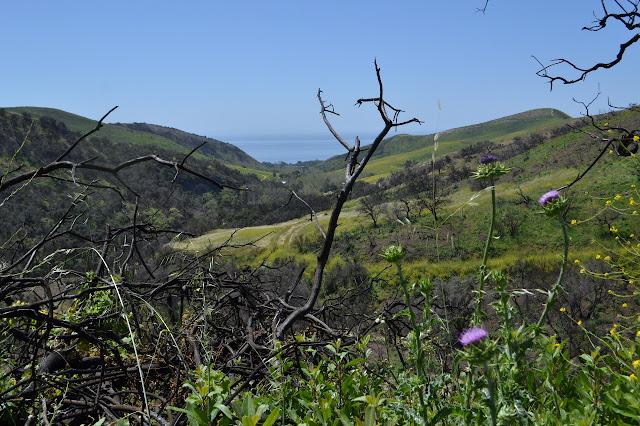 Cañada del Capitan