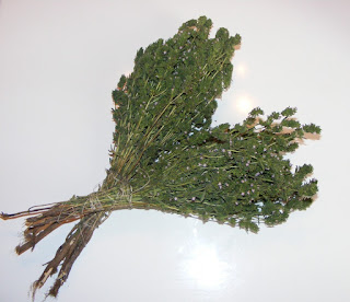 cimbru, cimbru verde, cimbru inflorit, plante medicinale, plante aromatice, retete cimbru, reteta cimbru, mirodenii, leac,