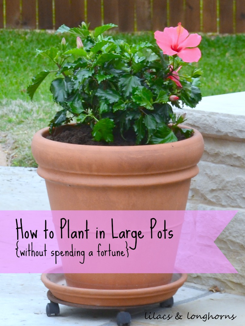 Large Garden Pots How To Plant In Large Pots Without Spending A Fortune Lilacs