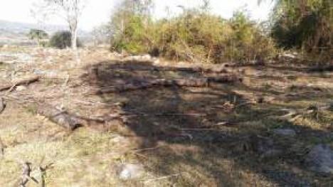 Dono de fazenda é multado por desmatamento ilegal em São João da Boa Vista (SP)