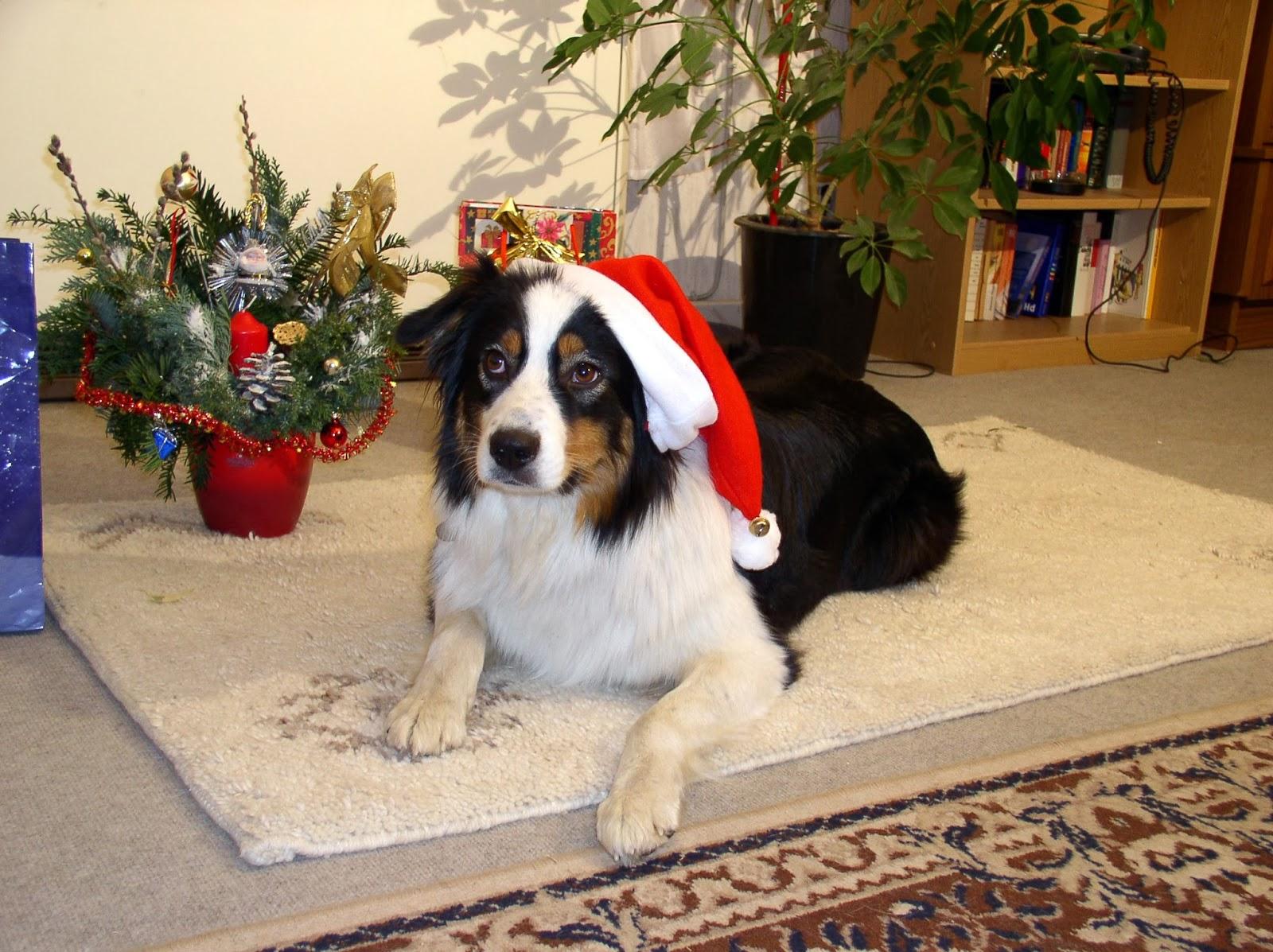 Hundesportverein-Obhausen: Weihnachtsfeier