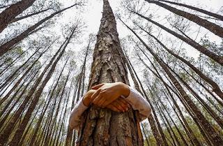 ¿Está bien que un cristiano Abrace un árbol?