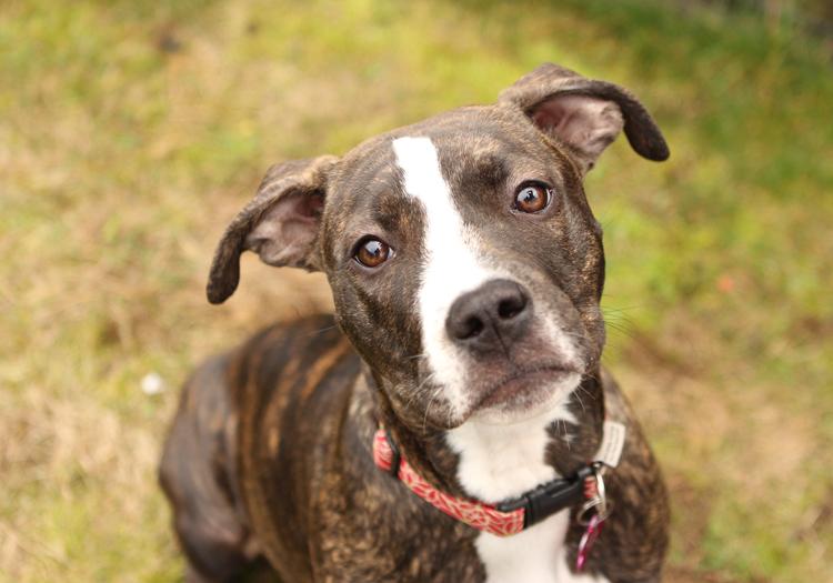 """Shelter Dogs of Portland: """"KALLI"""" nanny dog"""