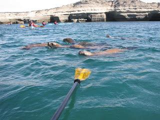 Expedicion en Kayak de Mar. Peninsula Valdes. Costa Sur del Golfo San Jose 3 dias