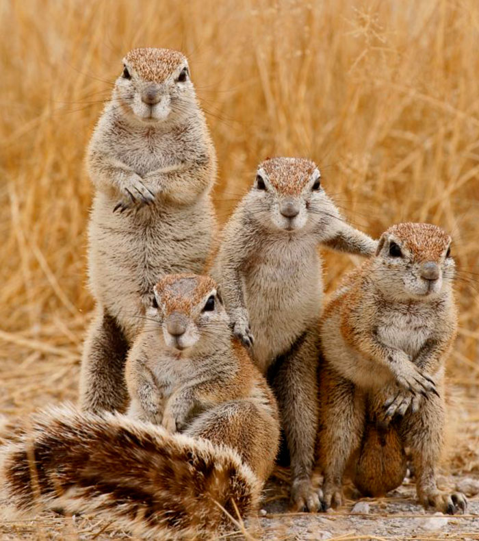 32 Animals That Look Like They're About To Drop The Hottest Albums Of The Year - The Hard Rock Squirrels