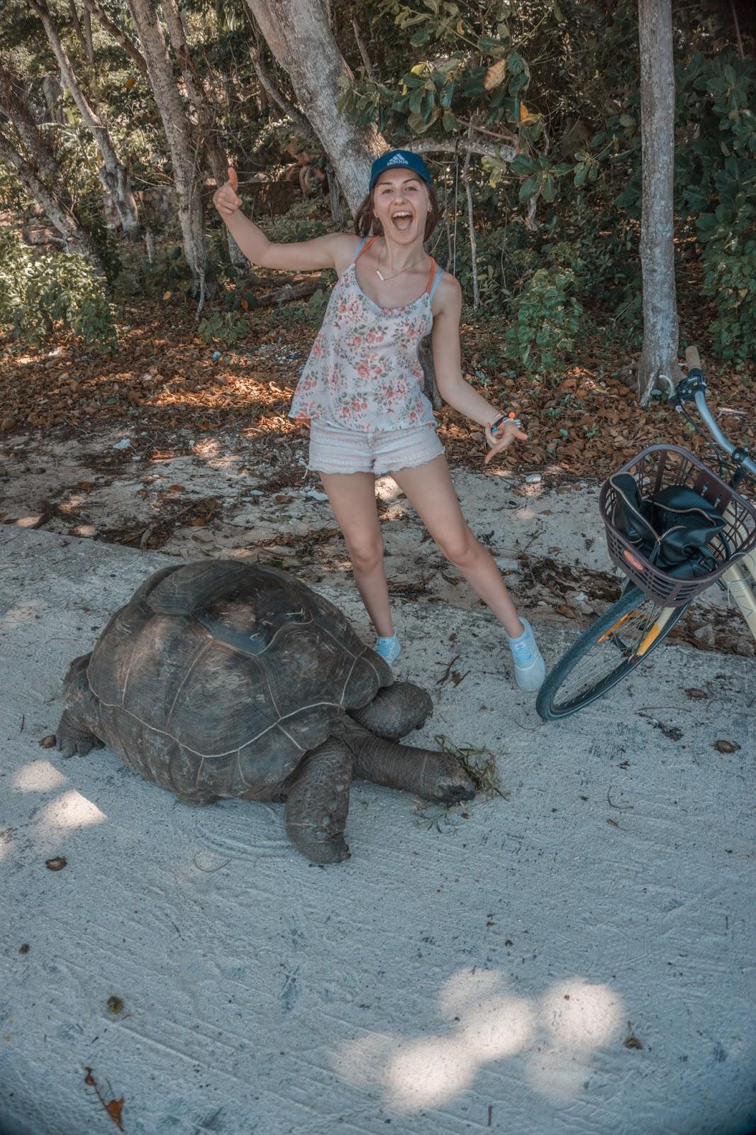 Seszele żółwie, żółwie w naturalnym środowisku, żółwie na Seszelach, żółwie La Digue, żółwie Praslin, blog podróżniczy