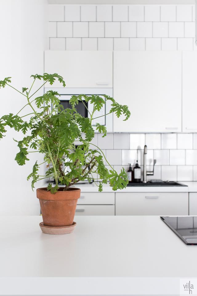 pelargonia, viherkasvit, keittiö