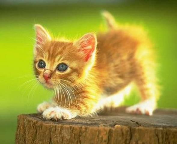 Gatos Tiernos Y Lindos Dibujos