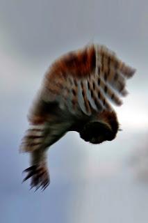 Makhluk yang Pernah Hidup di Bumi - Burung Hantu