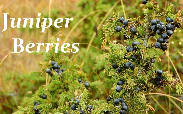 http://everydayspices.webs.com/apps/blog/show/6664512-spice-spotlight-juniper-berries