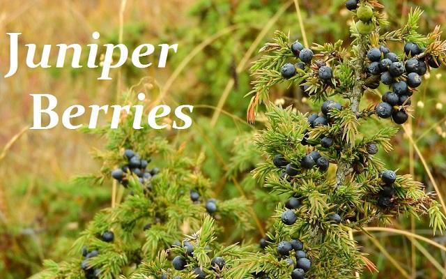 http://everydayspices.webs.com/apps/blog/show/6664512-spice-spotlight-juniper-berries