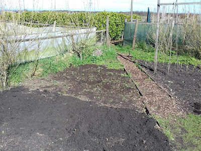Allotment Growing - Leek Bed