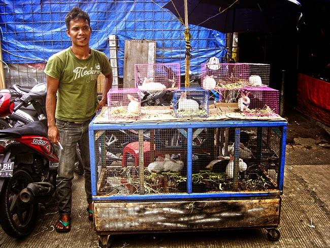 Venta de conejos en Bogor