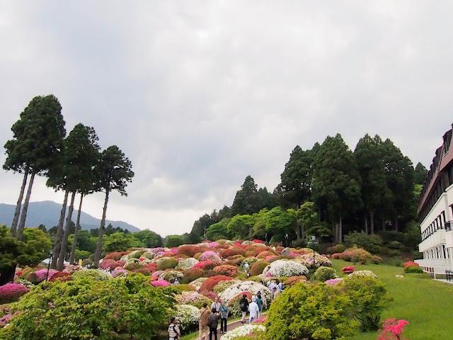 箱根 山のホテル ツツジ