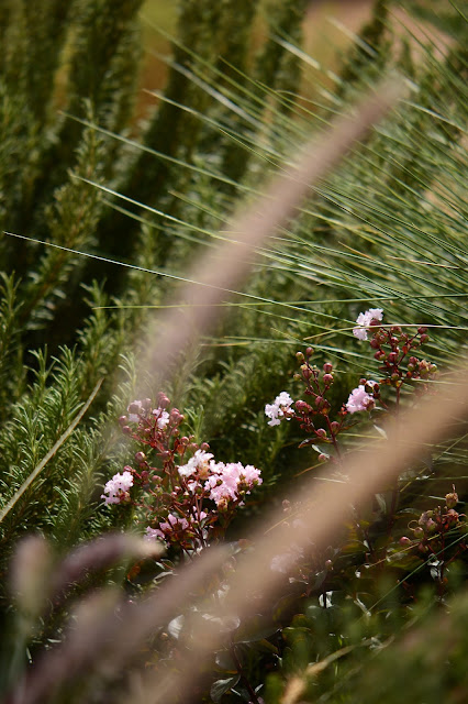 tuesday view, small sunny garden, desert garden, amy myers, photography