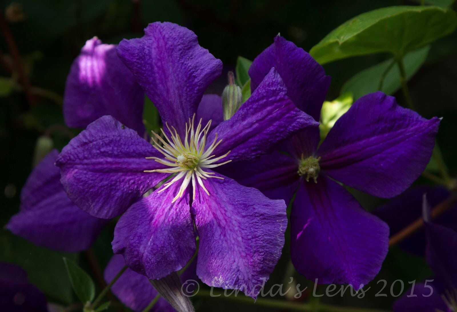 Purple flowers names and pictures