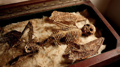 Descobertos esqueletos