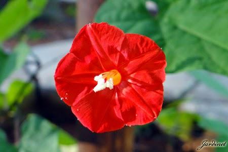 Atrativa para beija-flores