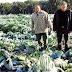 Ο Δήμος Ναυπλιέων έκανε την προβλεπόμενη αναγγελία και καλεί τους παραγωγούς να υποβάλλουν δηλώσεις στους ανταποκριτές του ΕΛΓΑ για ζημιές λόγω παγετού