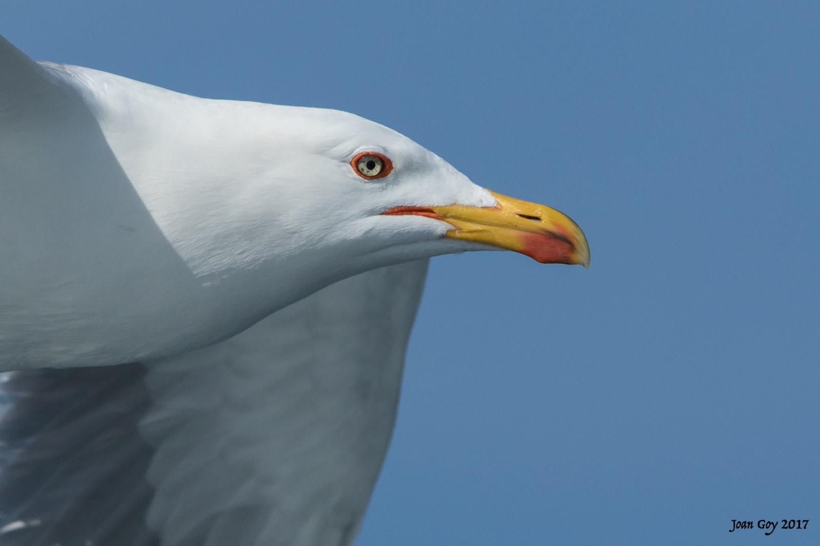 Mallorca Bird Ringing