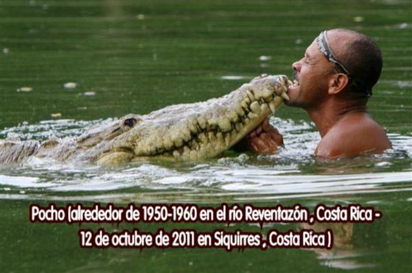 Un cocodrilo de 4,5 metros como mascota