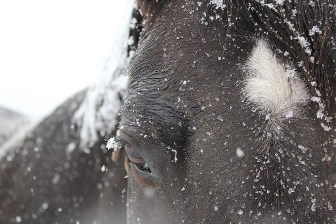 Quand et comment couvrir son cheval ?