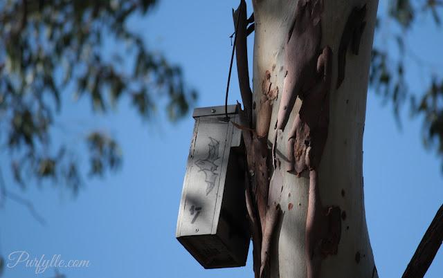 nesting box for bats