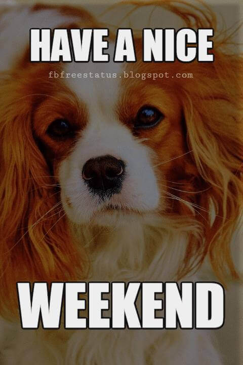 Have a Great Weekend, Have a Nice Weekend.