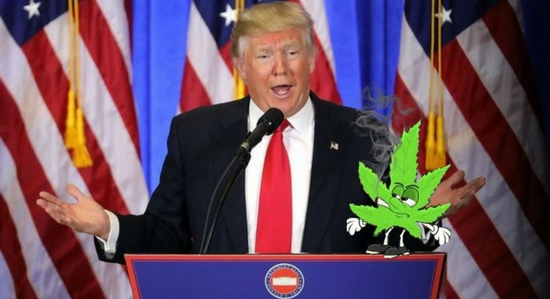 Trending Cannabis and Trump
