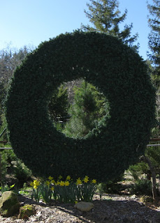 Daffodils bloom at the base of a giant artificial wreath, Patchen, California