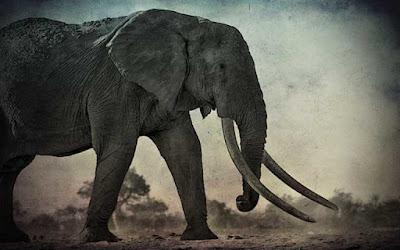 Εμφάνιση γιγαντιαίων ελεφάντων, το 1939
