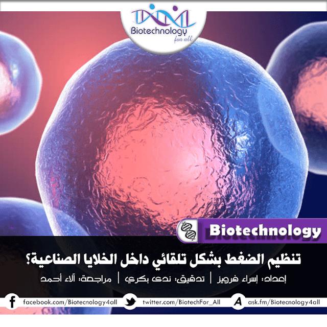 تنظيم تلقائي لضغط الدم عبر الخلايا الصناعيّة