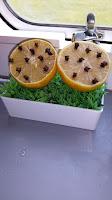 citroen-met-kruidlnagel