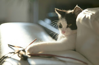 Cara Membuat Mainan Kucing