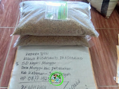 KUKUH RUSBIYANTO Kebumen, Jateng   Pembeli Benih Padi TRISAKTI 75 HST Panen.  10 Kg atau 2 Bungkus