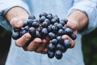 Beaux-Vins biodynamique bio vin dégustation blog