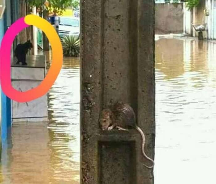 Kemana Kucing Saat Banjir