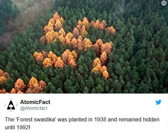 mungkin dunia akan dilanda banyak sekali tragedi dan makhluk hidup kesulitan bernapas di dalam Misteri Hutan Yang Belum Terkuak Oleh Ilmu Modern