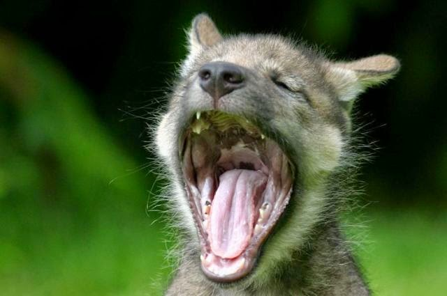 What Causes Yawning? The Urge to Yawn